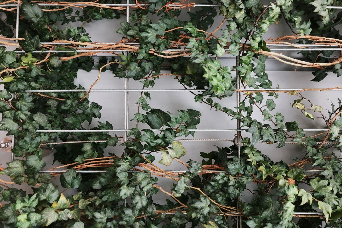 Rampicanti Adatti In Vaso come creare un sostegno per le piante rampicanti? ecco